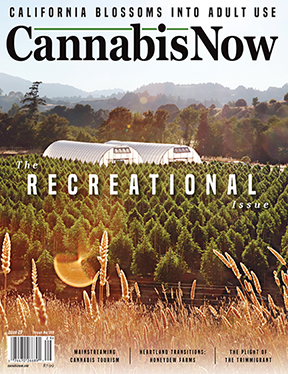 Cannabis Now.PNG