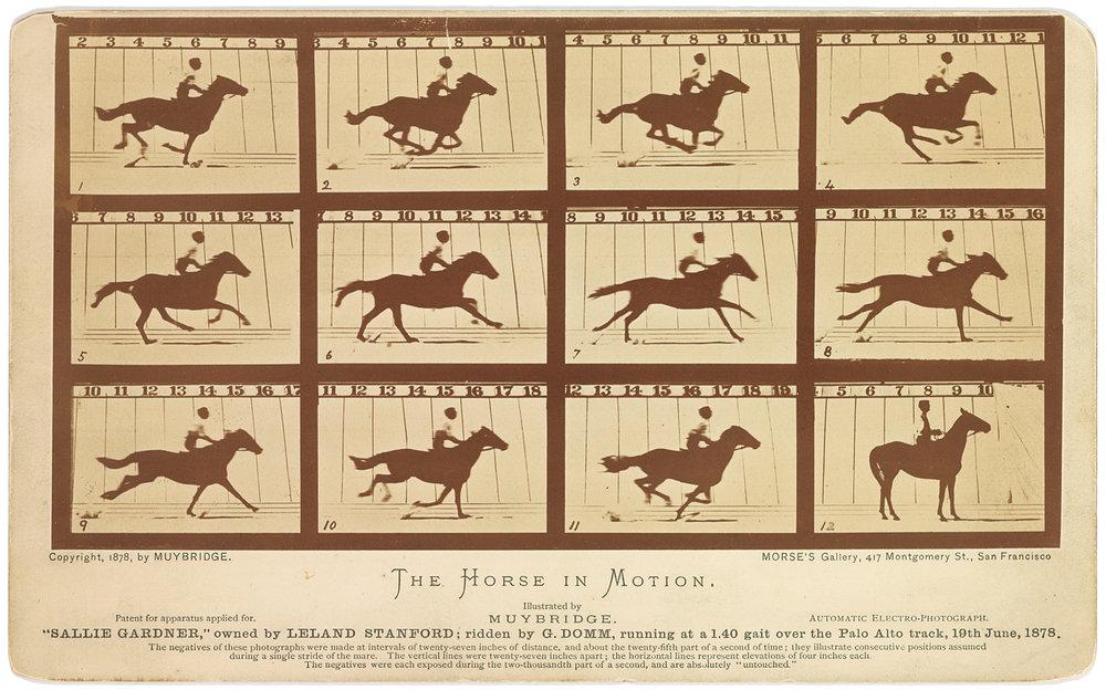 HorseInMotion_Muybridge_1878.jpg