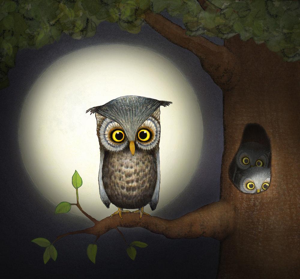 owl_01A.jpg