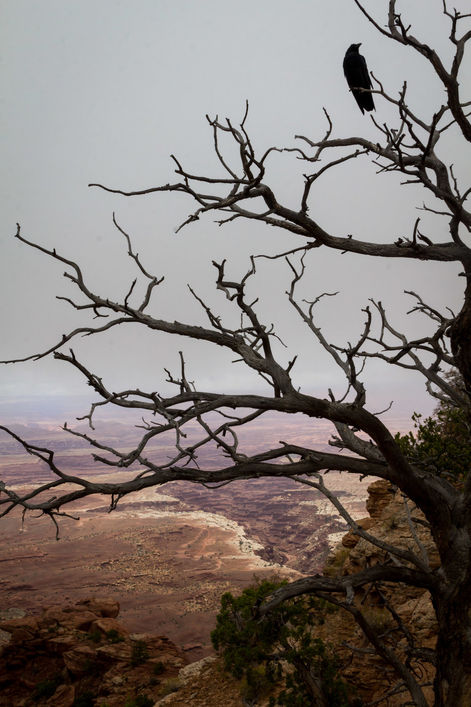 Canyonlands-184.jpg