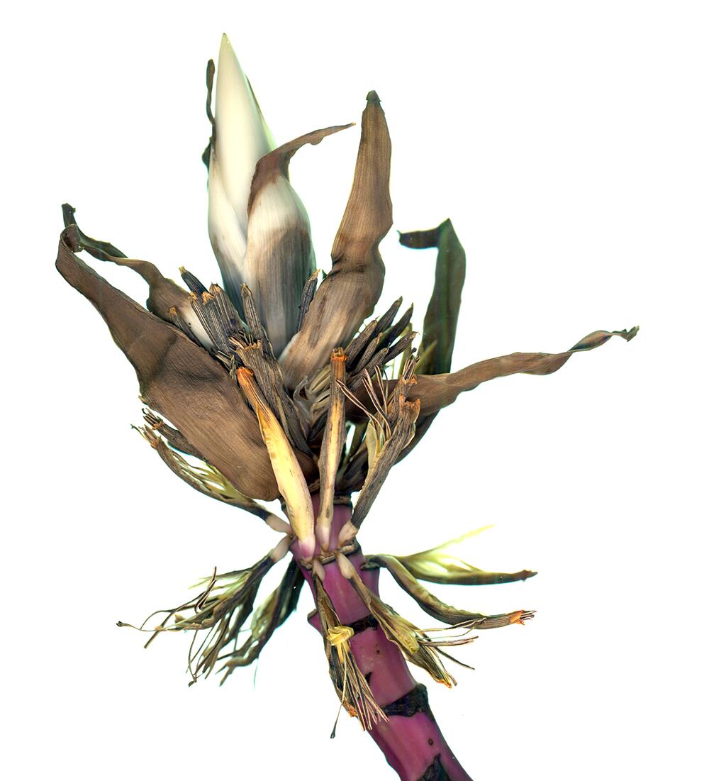 Dry flower_2.jpg