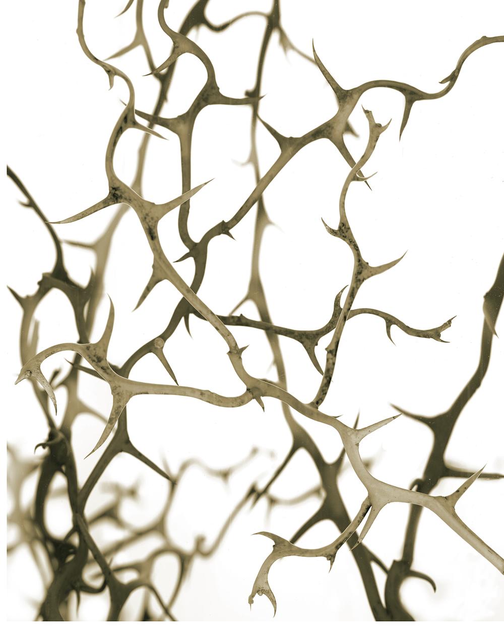 Thorns_2.jpg