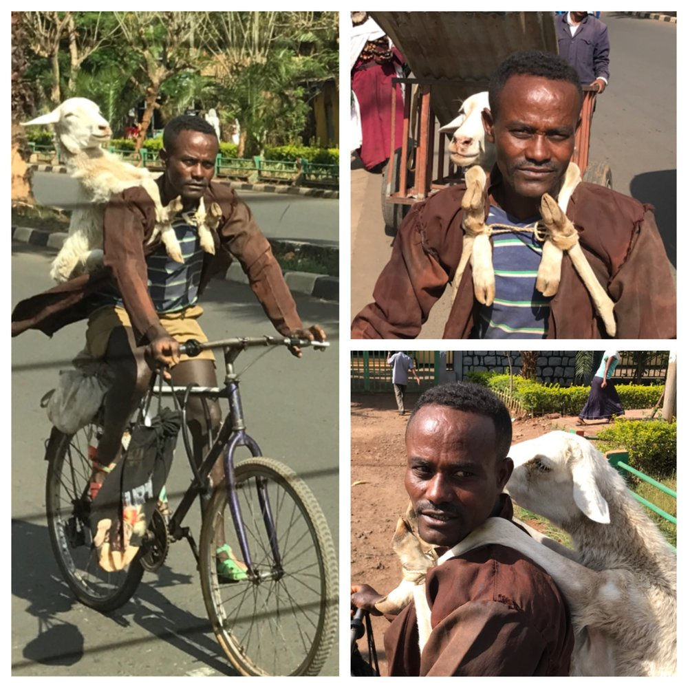 "We were driving down the road in Bahir Dar Ethiopia when we came upon a man wearing a white backpack. Quickly, we realized it was not a backpack, but a sheep. The sheep's legs and been tied together in such a way that he could wear it like a backpack. The look on the sheep's face as we passed him, made us think the sheep might actually be having fun. The look on the man's face initially told us he was not. We asked our driver to stop. I got out of the van and asked the man if I could take his picture. he posed. A small smile emerged on his face. The sheep peered around from behind the man. The sheep did not make a sound. It did not struggle. I wonder if it knew what we knew. That sheep was not being taken on a pleasure journey. He had been invited to dinner, in fact to be dinner. It was a strange moment. We thought of the moment often while we were in Ethiopia. It made us laugh. It also made us so aware of how different our worlds are. I have never seen someone wearing their dinner as they rode down the street in Athens (or for that matter anywhere else I have ever traveled). I felt sorry for the sheep. It did not look comfortable. There is almost no refrigeration in Ethiopia, because there is uneven and sporadic power in Ethiopia.  They live more day to day than we do. They prepare food for the day. They understand ""daily bread."" I never return to the U.S. without being incredibly grateful that I won the geographic lottery and was born in this imperfect, but amazing country. We have so much. We are not nearly grateful enough. Clean water, refrigeration, adequate food supply, air-conditioning, social services, infrastructure, flushing toilets, toilet paper, consistent power, representative democracy, a free market, low corruption, way less bureaucracy, education, opportunity, and hope. I was amused by some of the things we saw, and grieved by much of what I saw. I saw people miles out of a remote city that likely will never have any opportunity for education or advancement. They will be subsistence farmers eking out an existence hacking away at a rock strewn field. The area is 95% non-Christian. We met some pastors who are trying to reach them for Christ. These pastors have almost nothing, but they have the Gospel, their passion and love for the people of Ethiopia and the Spirit of God. I return with a bigger prayer list. Jesus, the Bible says, ""took up our pain and bore our suffering, ...he was pierced for our transgressions, he was crushed for our iniquities; ...was oppressed and afflicted, yet he did not open his mouth; he was led like a lamb to the slaughter, and as a sheep before its shearers is silent,  so he did not open his mouth. Isaiah 53: 4-7. Jesus takes up the suffering of the world and carries it in his own body that everyone might know of his love."