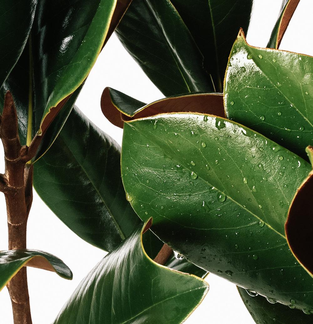 Roseur-Magnolia-Sarah-Treu-Photography.jpg