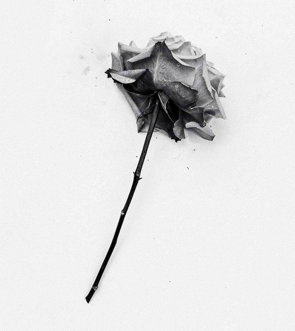 Black-Rose-True-Photo.jpg