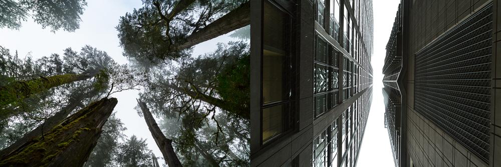 Northwest Forest-Seattle Cityscape
