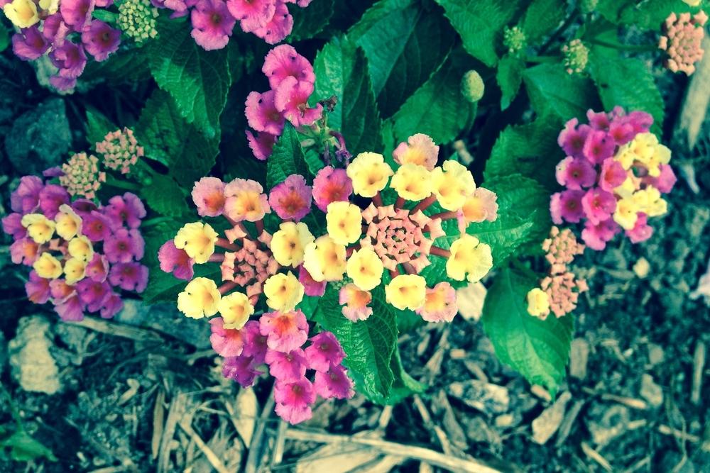 mikeflowers.jpg