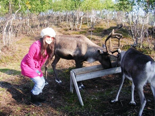You can just hang out with reindeer in Norway, you guys.