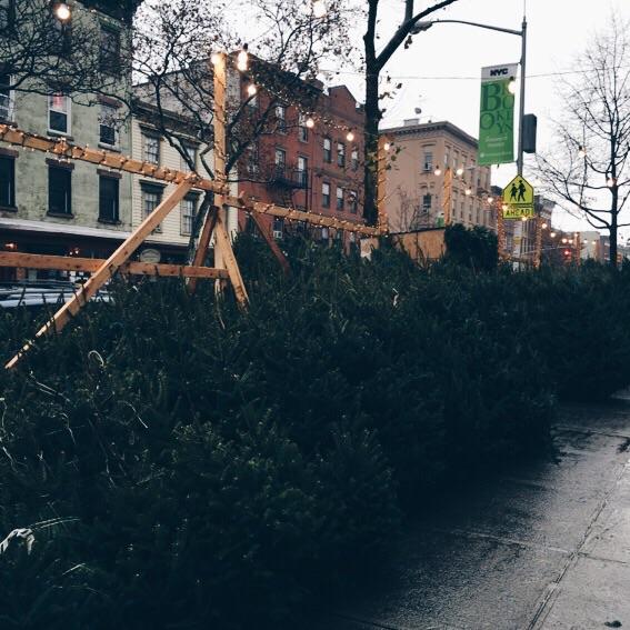 Tis the season for rain-soaked street trees.