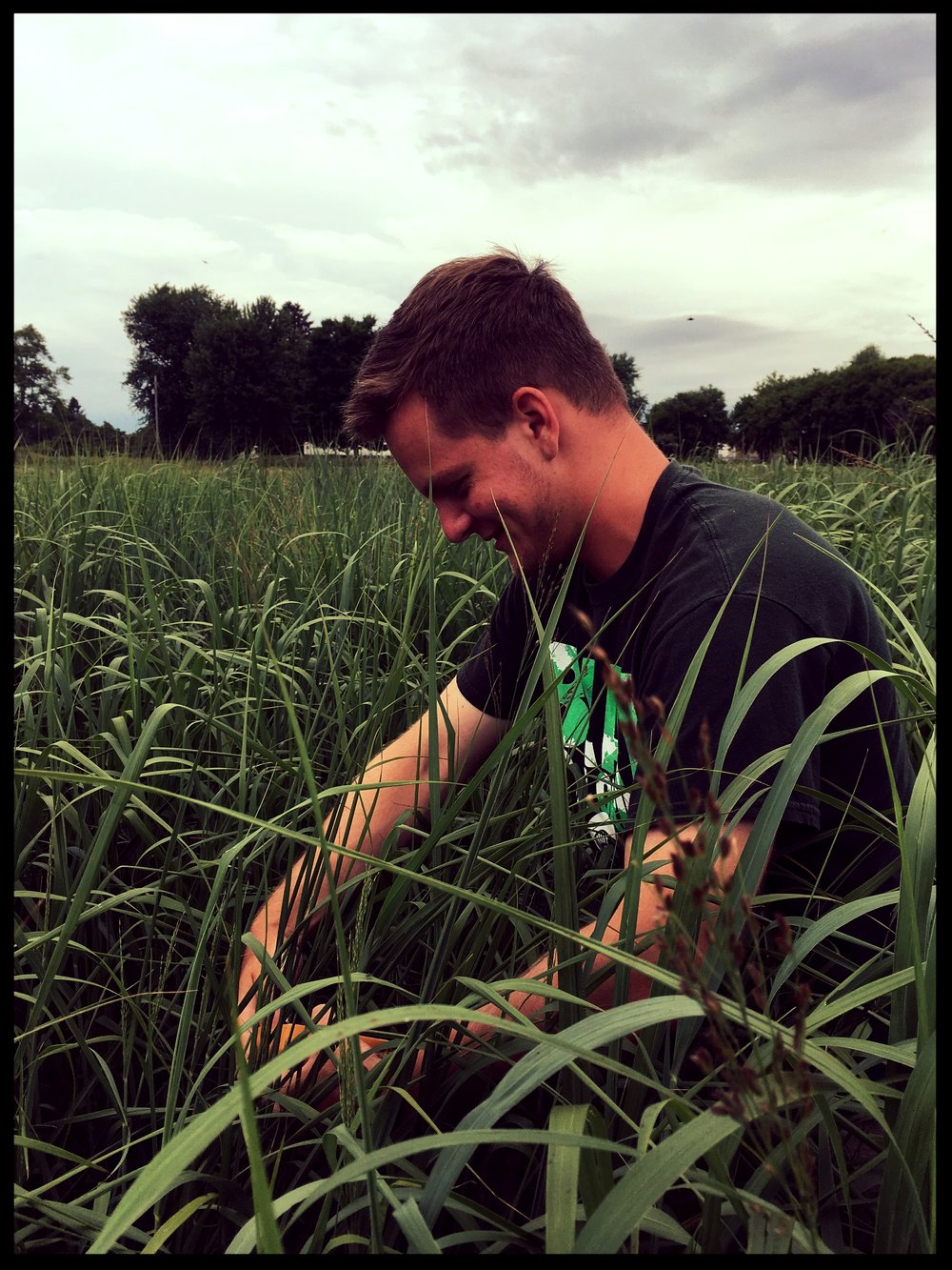 Peter Drogosh collecting leaf area samples in the field (July 2016)