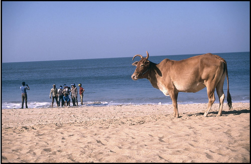 Goa India, 1989  Photo Frank Habicht