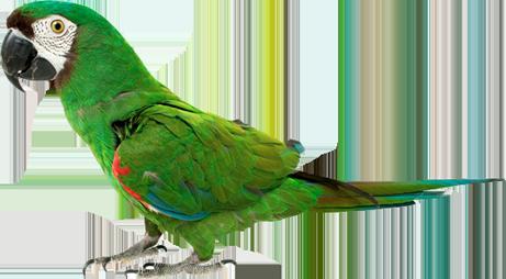 Avian Amp Exotic Medicine Vah