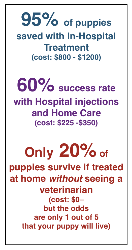 Treating Parvo In Dogs Vah