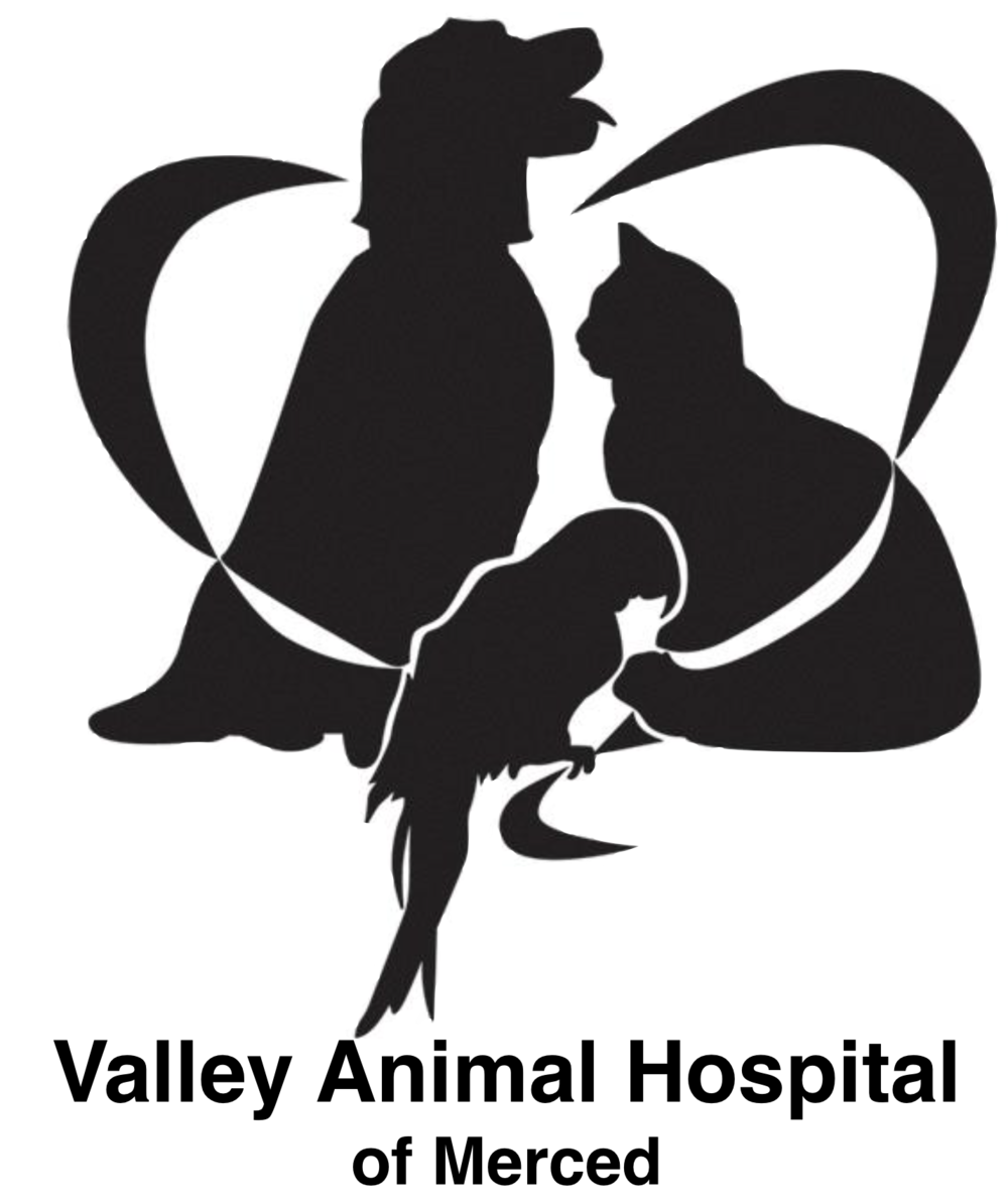 Valley Logo.png