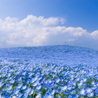 sea of flowers.jpg
