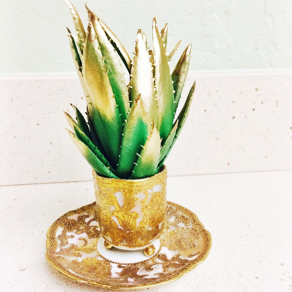 antique saucer with succulent.JPG