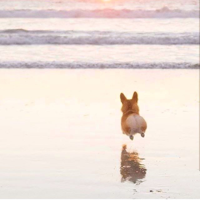 Our favorite Corgi rump to get us over the hump.  Happy Wednesday! Did you know we donate to a homeless charity EVERY SINGLE TIME you purchase from @feels.like.om ? Pets and people alike, everyone deserves a place that Feels Like Om. Learn more on www.FeelsLikeOm.com