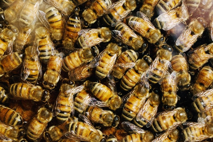 Bees use honey to get through the winter.