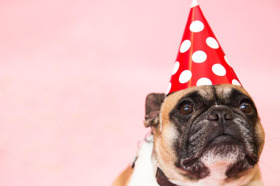 dog-in-party-hat_925x.jpg