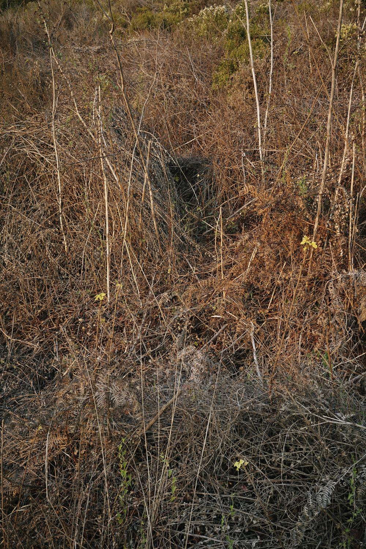 Molloy2_2014-Oct-Landscape-01978.jpg