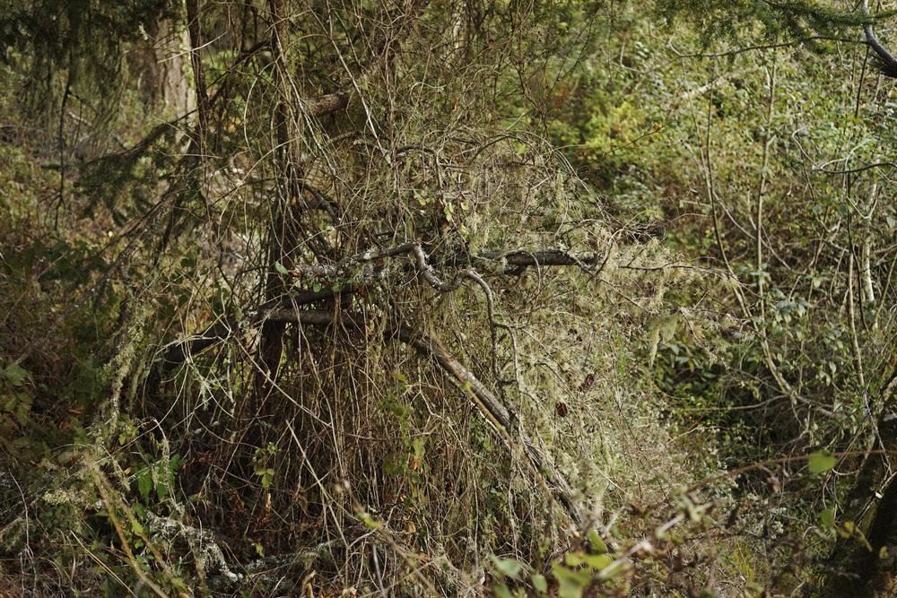 2014-Oct-Landscape-01982.jpg