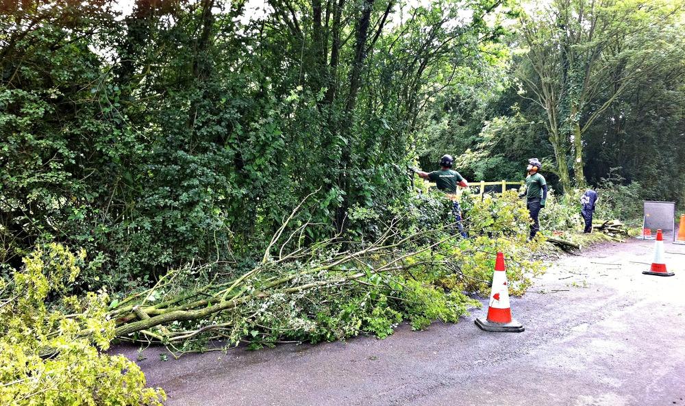 Greenacre_Trees_Landscapes_Roadside hedge work 3_picmonkeyed.jpg