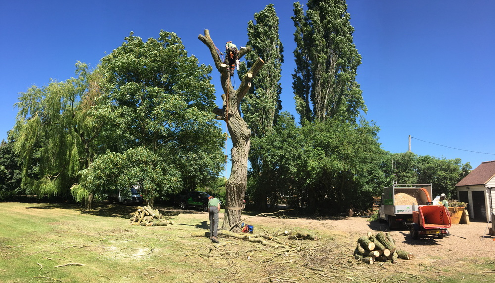 Greenacre Trees & Landscapes Ltd Panoramic Dead Willow Dismantle.jpg
