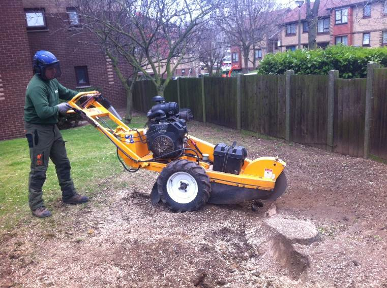 Greenacre_Trees_Landscapes_Stump grinding 5.JPG