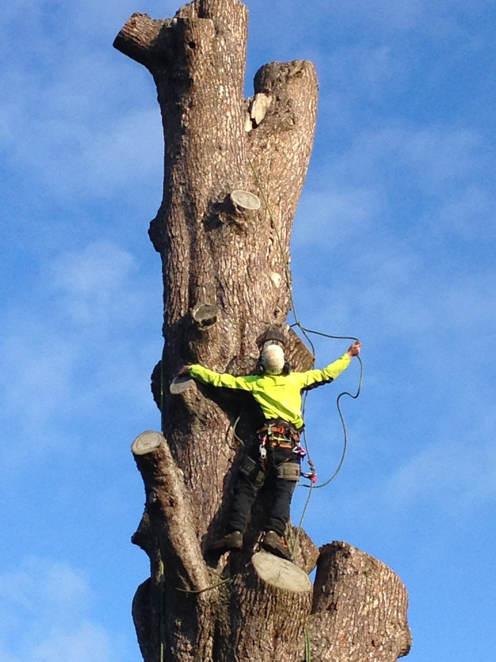 Greenacre_Trees_Landscapes_Large tree dismantle.JPG