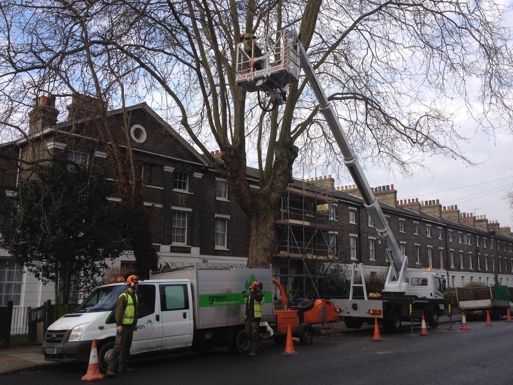 Greenacre_Trees_Landscapes_Roadside tree work with platform 27.JPG
