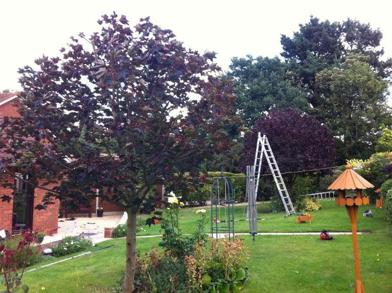 Greenacre_Trees_Landscapes_Small Tree Pruning finished results.jpg