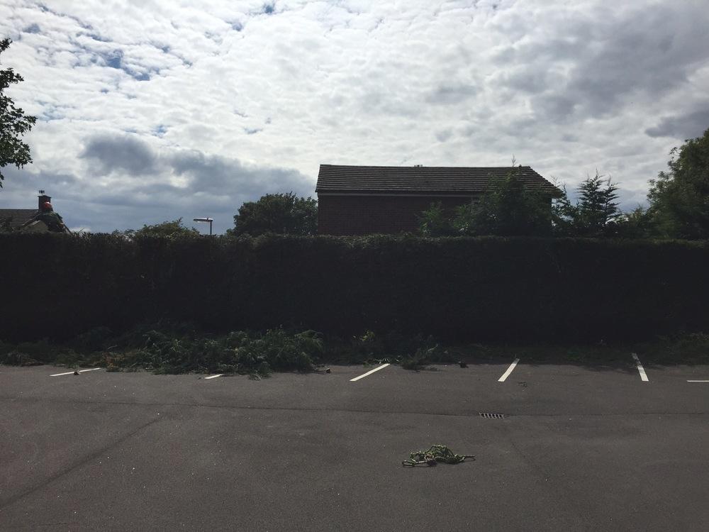 Hedge trimming 2.jpg