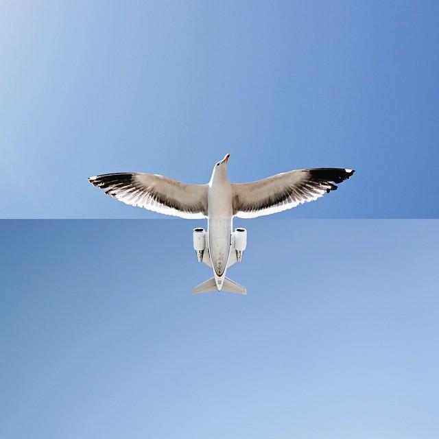 seagull + airplane,  Stephen McMennamy