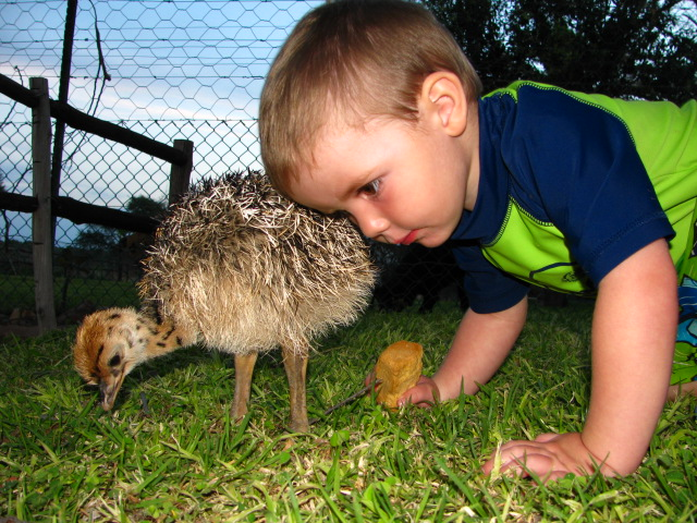 The apple does not fall far from the tree it would appear! Daniel, Andries's son with his orphan Ostrich chick.