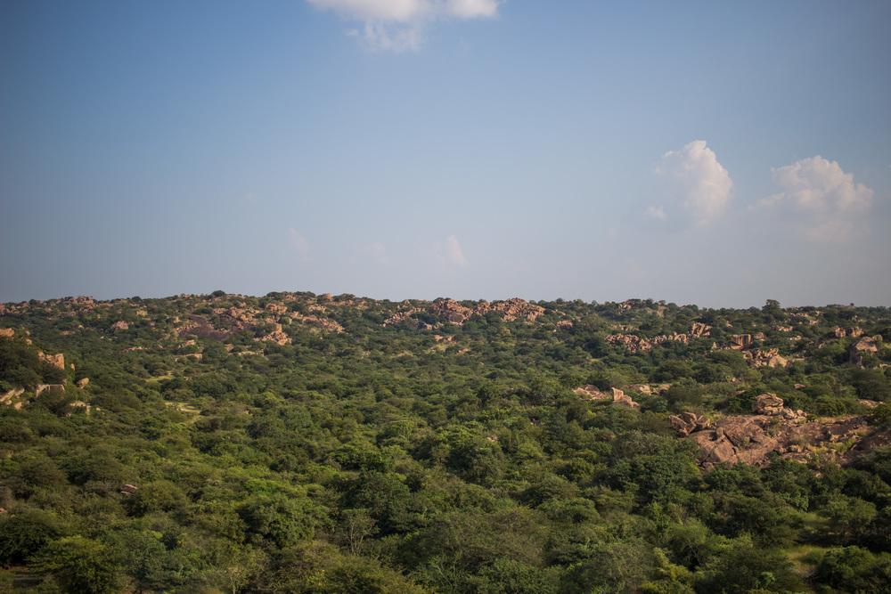 The sanctuary landscape