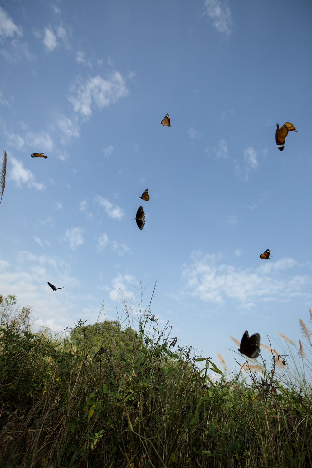 In order to get all the butterflies in focus, i had to increase my aperture so that the depth-of-field was large enough to capture them all (well, most of them)! :)