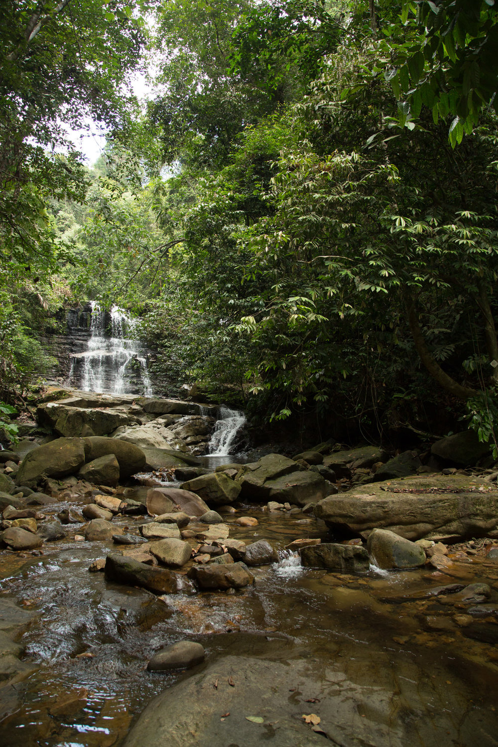 All forrests need water, and borneo is no exception, with lots of rivers and waterfalls deep in the jungle