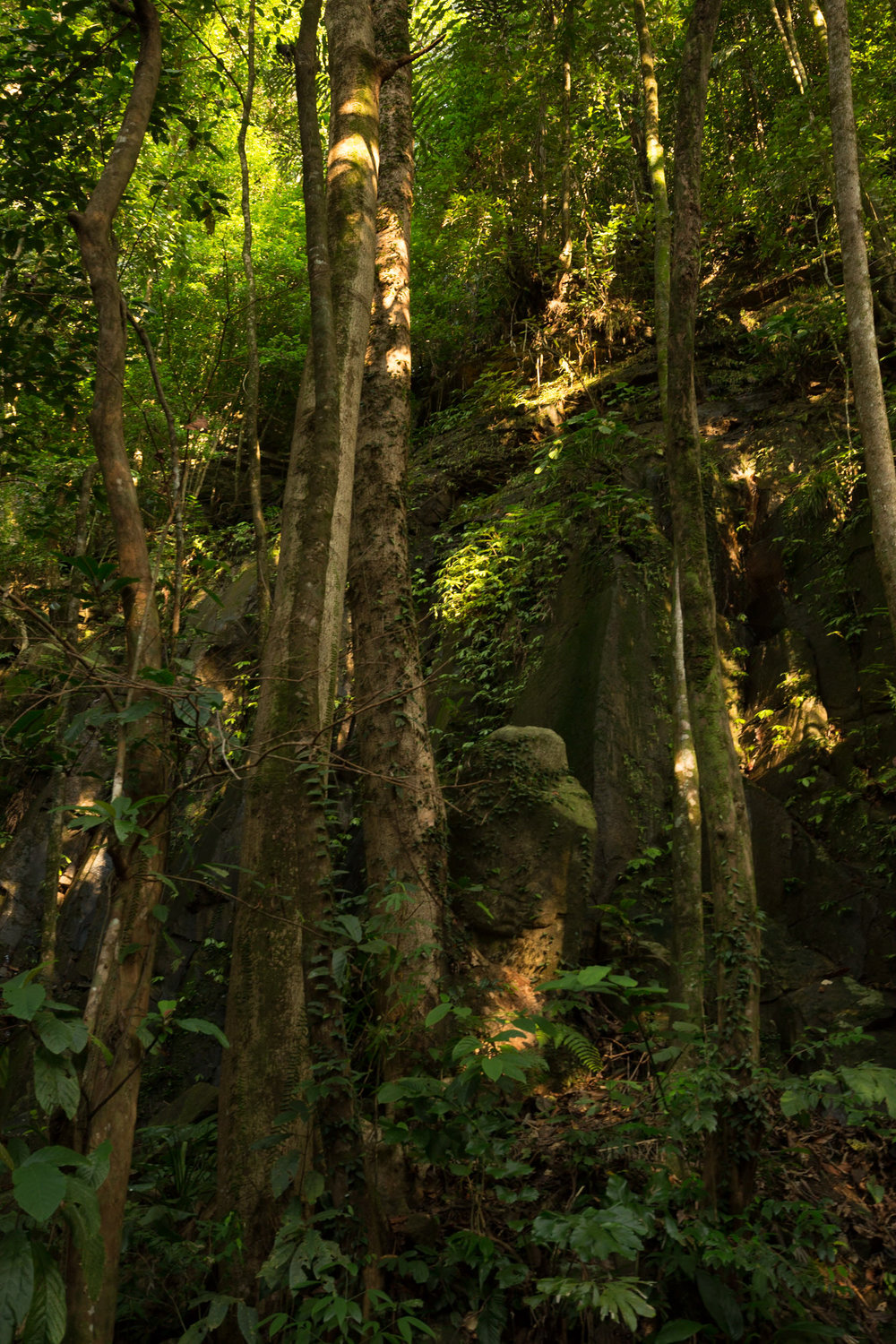 The jungle Borneo is extremely dense, hot and humid, with only a few anomalous sun rays making it to the ground.