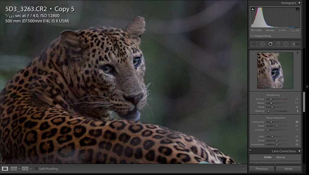 but when comparing to this image BEFORE the local adjustment, you can see the leopard is sharper, but the noise is not effected.