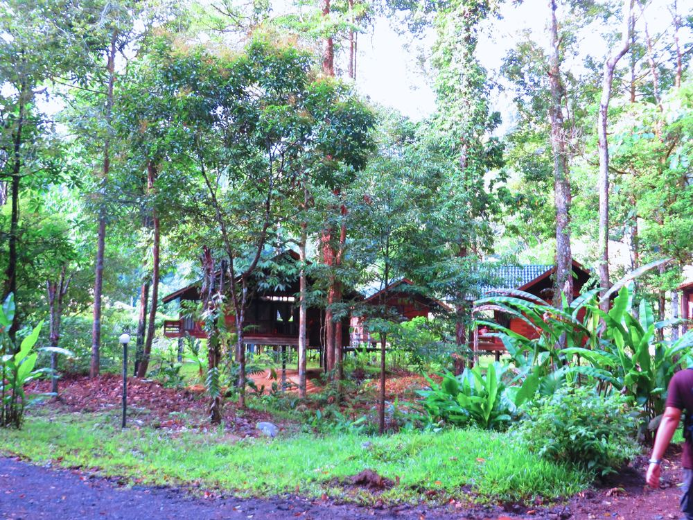 Home in Borneo.