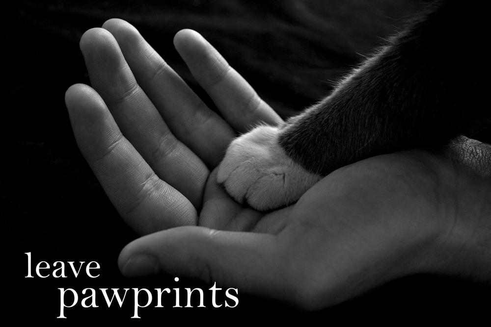 3 leave pawprints.jpg