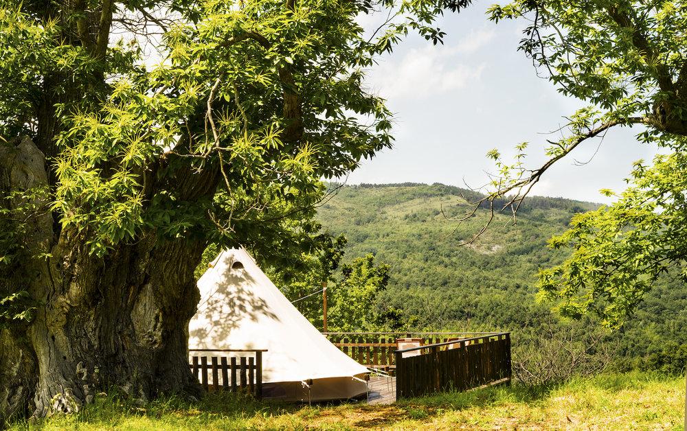 3. Tenda chestnut.jpg