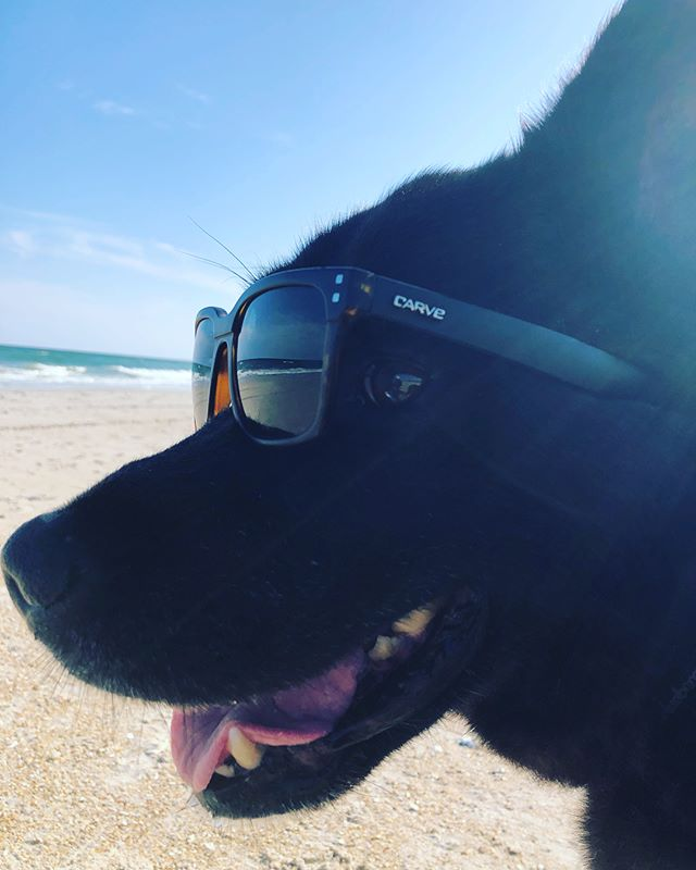 Covering angles of some fresh shades. #sunglasses #forall #dog #human #whatever #nc #carve #beach