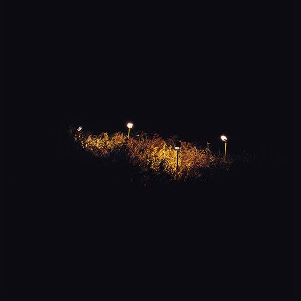 ferns_589.jpg