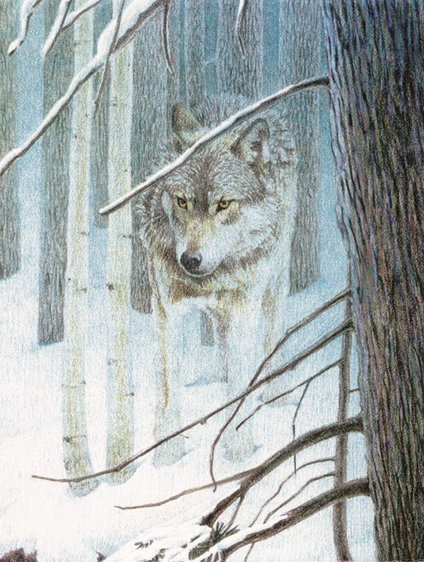 "Wolf Pencil Sketch - Limited edition print on fine art paper. Image size: 5.5""x7.5"". From $75"