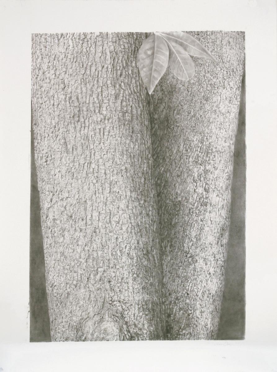 """Treeform I, 38"""" x 50"""", 2010"""