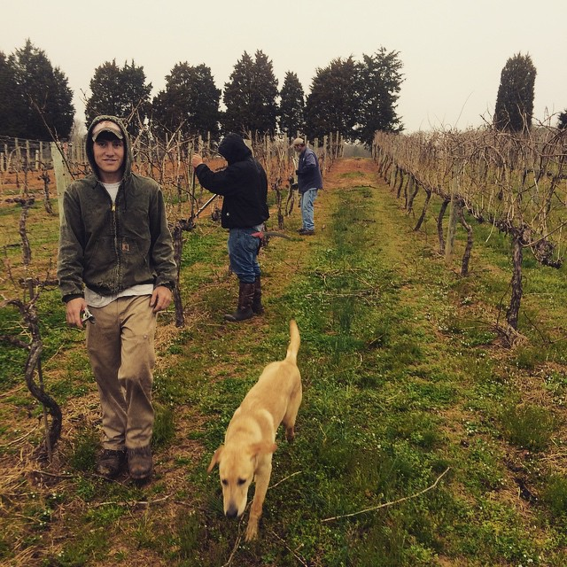 The guys are hard at work finishing up our winter pruning in the vineyards as the buds start to swell!