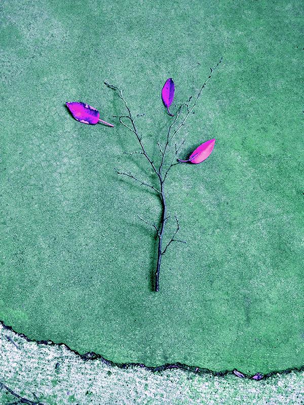 Pink-IMG_3500.jpg