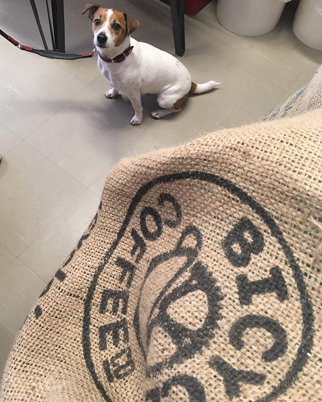 きょうのわんこ。 #bicyclecoffeetokyo #bicyclecoffee #toranomon #coffee #dogcafe #dog #bicycle #犬 #コーヒー #虎ノ門 #散歩 #お散歩 #ワンワンわんだーらんど