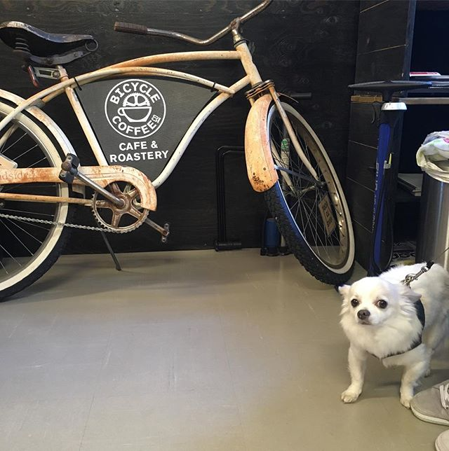 きょうのわんこ。#freecoffeefriday #bicyclecoffeetokyo #bicyclecoffee #toranomon #dogcafe #dog #coffee #bicycle #freewifi #新虎通り #虎ノ門 #コーヒー #friday